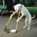 dog cleaning up own poop