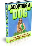 how-to-adopt-a-dog-guide